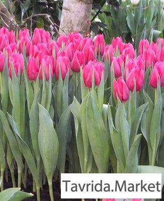 Цветов продажа цветы срез оптом симферополь свадебные цветы