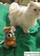 Котик на фотосессию