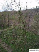 земельный участок, г. Старый Крым