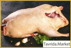 Мясо домашней индоутки