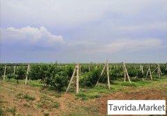 Действующие виноградники