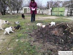 Ищут дом и заботливых хозяев милые щенята