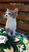 милый котенок 1,5 месяца
